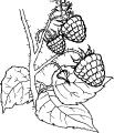 Frukt_12