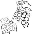Frukt_16