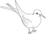 Ptica_10