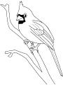 Ptica_11