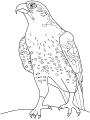 Ptica_12