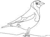 Ptica_13