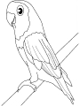 Ptica_15