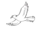 Ptica_16