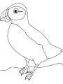 Ptica_17