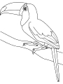 Ptica_18