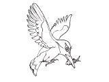 Ptica_20