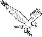 Ptica_8