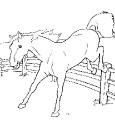 Horse_34