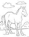 Horse_37