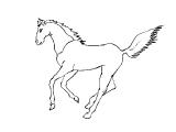Horse_41