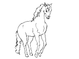 Horse_52