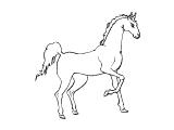Horse_62