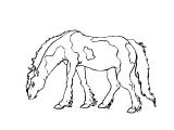 Horse_63