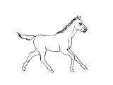 Horse_64