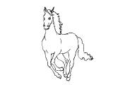 Horse_67