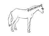 Horse_69