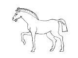 Horse_70