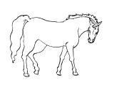 Horse_71