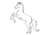Horse_72
