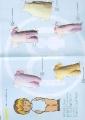 Бумажные куклы - Малыши (CLOTHESBETTY